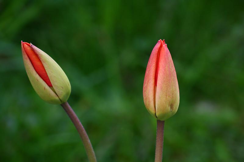 IMAGE: http://buttonmasher.smugmug.com/Flowers/flowers/IMG8480-copy/846249393_MEGCv-L.jpg